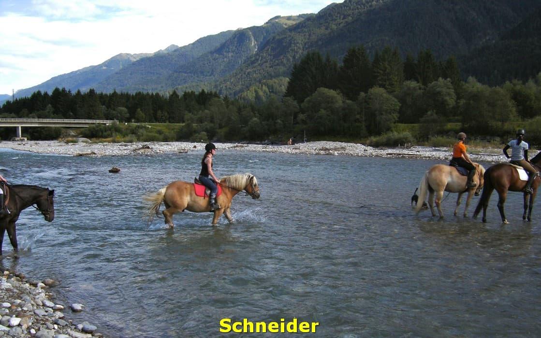 kwo-villa-activiteiten-karinthie-oostenrijk-21-paardrijden-schneider