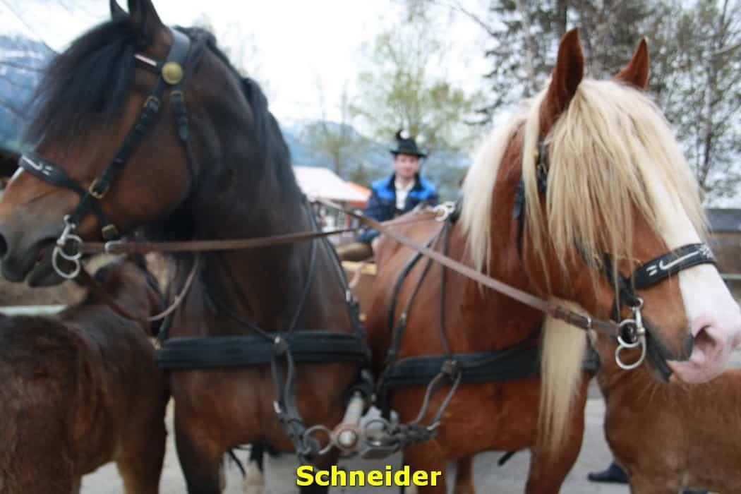 kwo-villa-karinthie-oostenrijk-16-koetstocht-manege-schneider