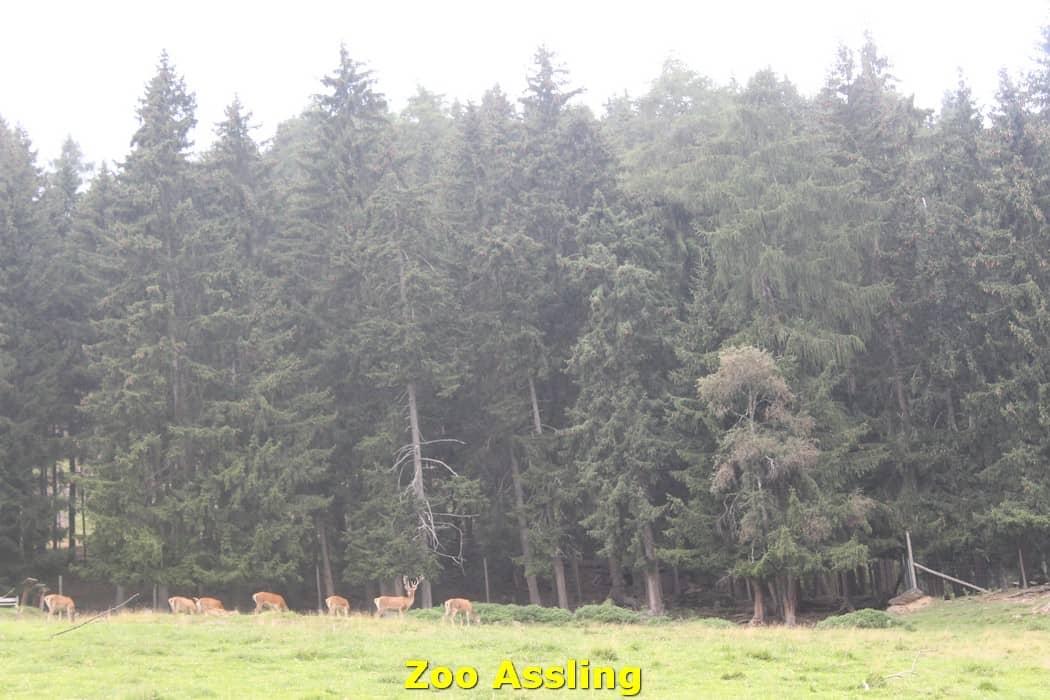 kwo-villa-karinthie-oostenrijk-18-dierenpark-assling