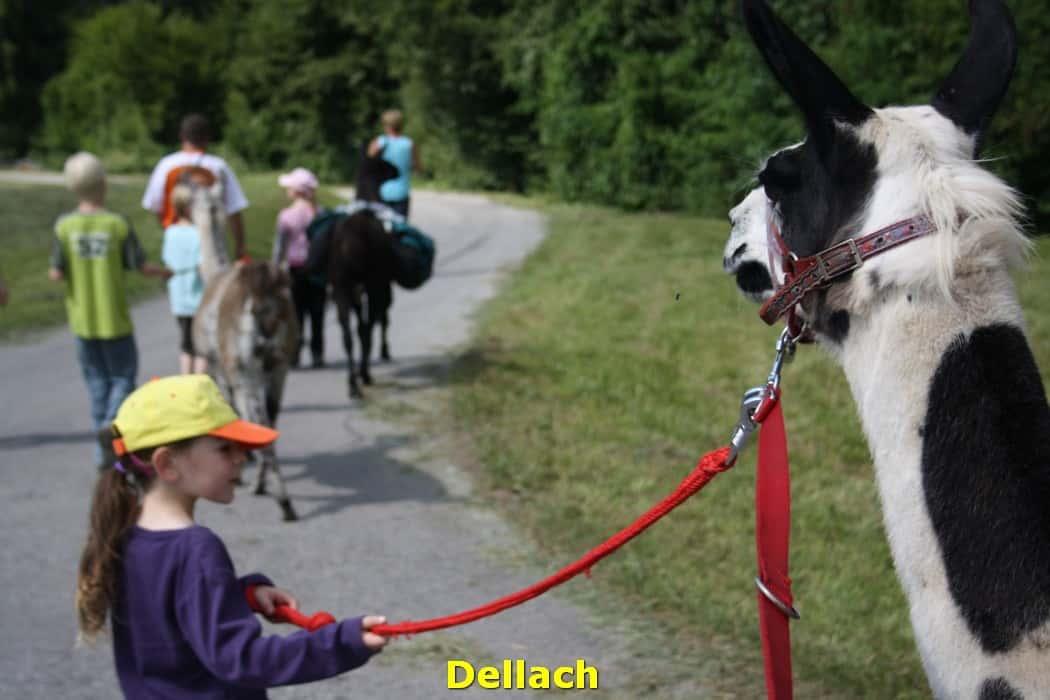 kwo-villa-resort-sonnepiste-kinderen-karinthie-oostenrijk-lama-trekking-dellach-10